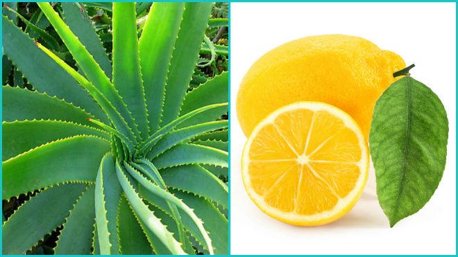 Лимон и алоэ