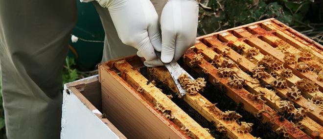 Продукт пчёл