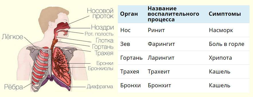 заболевания и симптомы