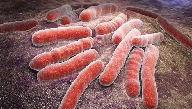 Возбудитель туберкулёза