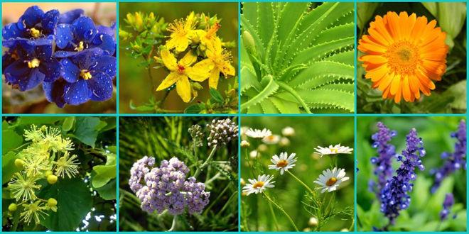Травы против воспаления