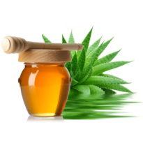 Народная медицина советует при простуде и кашле — столетник и мед