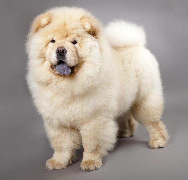 Собачий жир