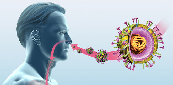 Бактерии и вирусы попадают в нос