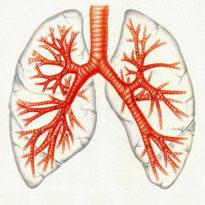 Хронический необструктивный бронхит: симптомы и лечение у взрослых и детей