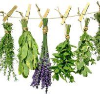 Травы при бронхите у взрослых: лучшие отхаркивающие рецепты